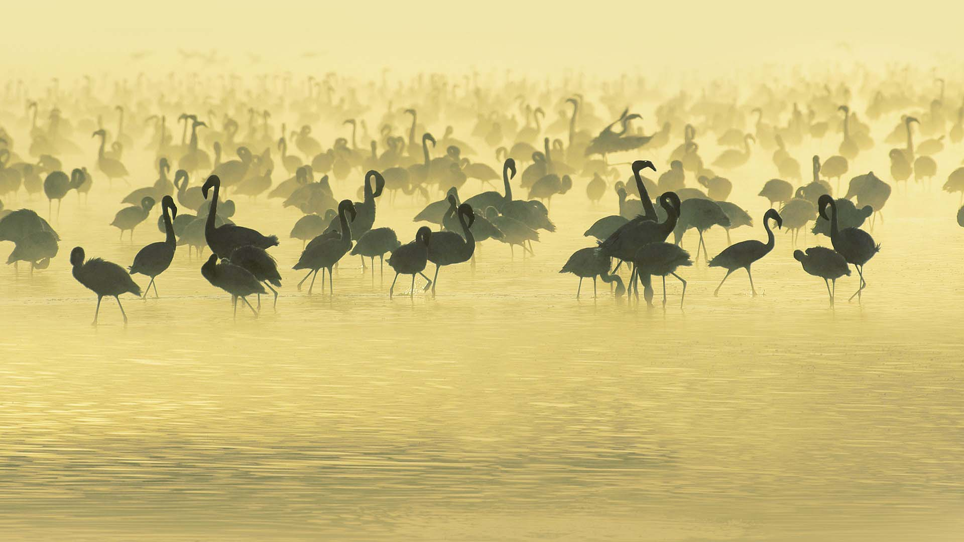 Birds-and-Animals-South-Africa-HD-Background-Animal-Birds-Flamingos-South-Africa-River-HD-Wallpa-wallpaper-wp3603341