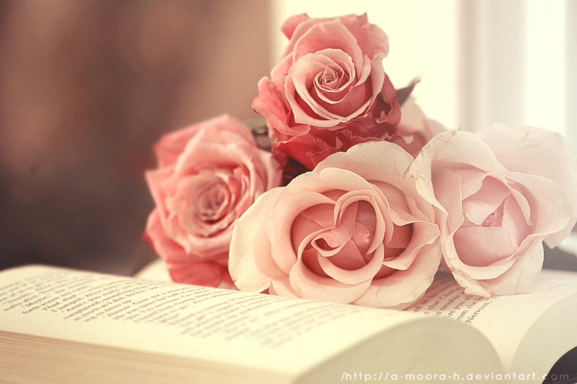 Book-Tag-Book-Pink-Purity-Roses-Flowers-Flower-Hd-Download-for-HD-High-Definition-wallpaper-wpc5803003