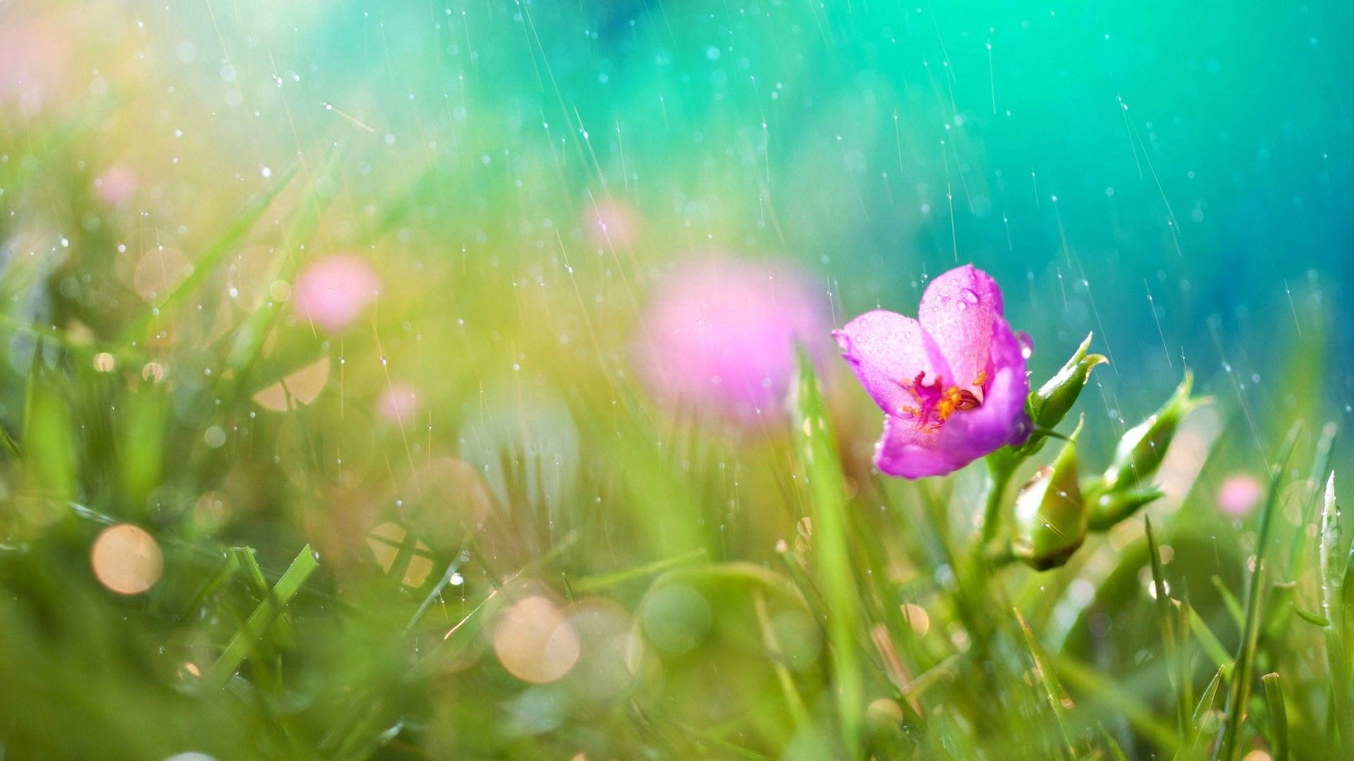 Braylen-Butler-rain-theme-background-images-1920-x-1080-px-wallpaper-wpc5803041