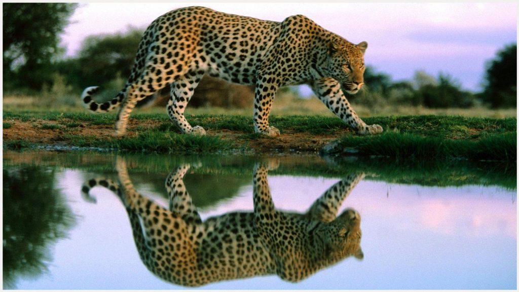Cheetah-cheetah-cheetah-4k-cheetah-border-cheetah-wallp-wallpaper-wpc9003450
