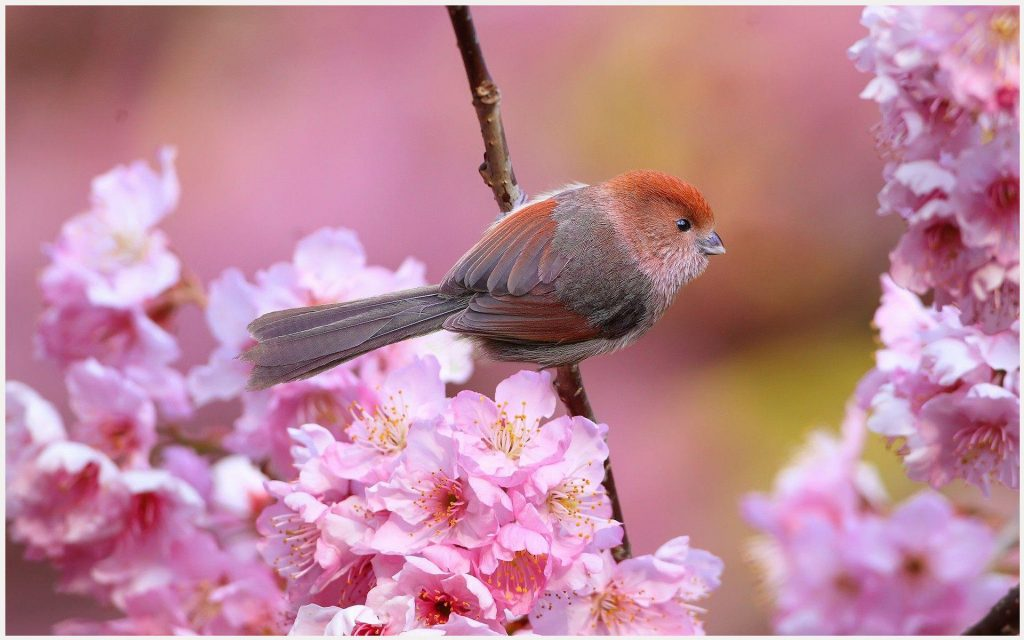 Cute-Little-Bird-In-Flowers-cute-little-bird-in-flowers-1080p-cute-little-bir-wallpaper-wp3804248