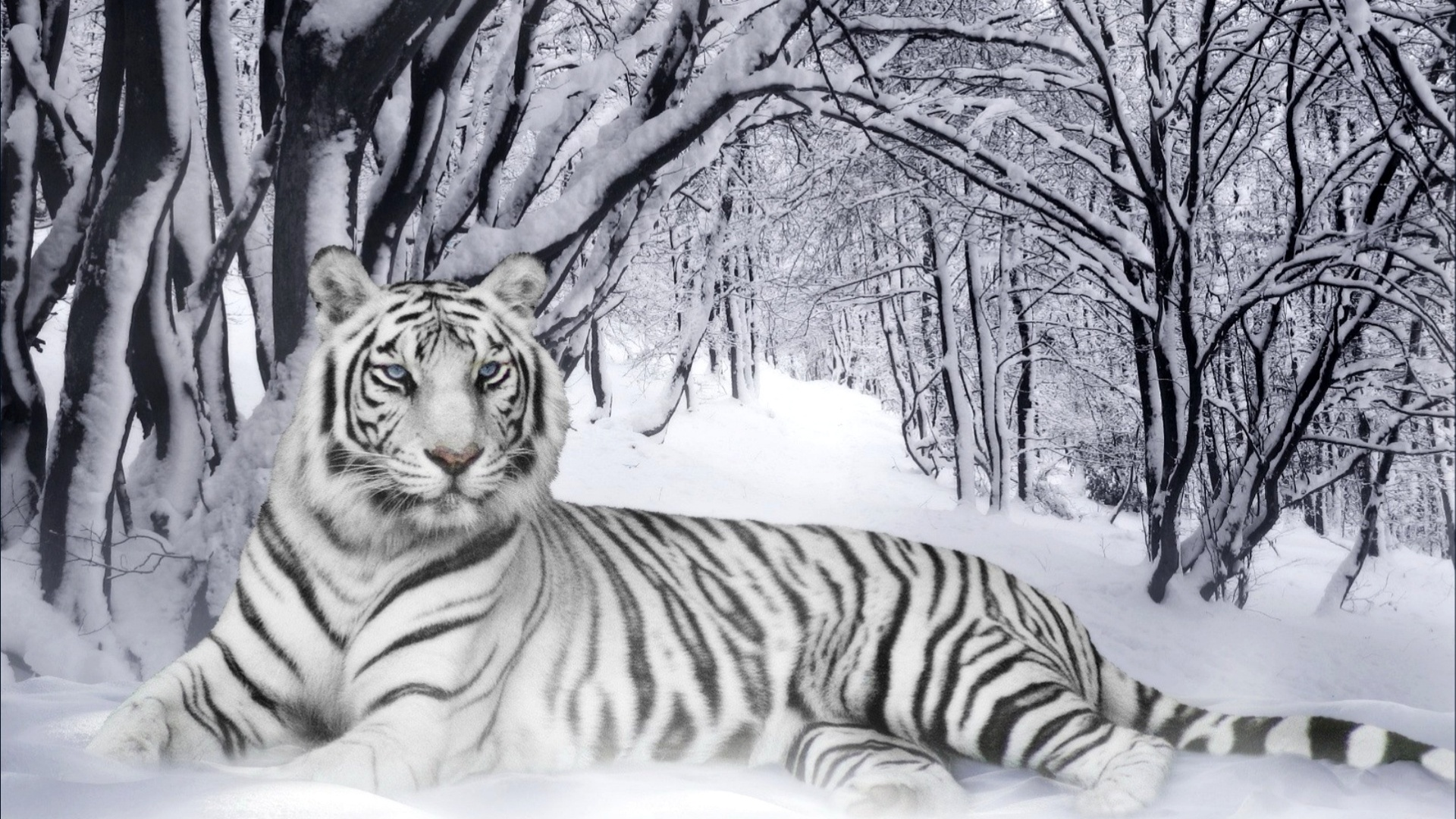 Cute-baby-tiger-dowload-wallpaper-wpc5803820