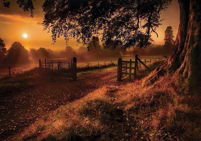 Derrymore-woods-county-Armagh-Ireland-wallpaper-wpc5804008