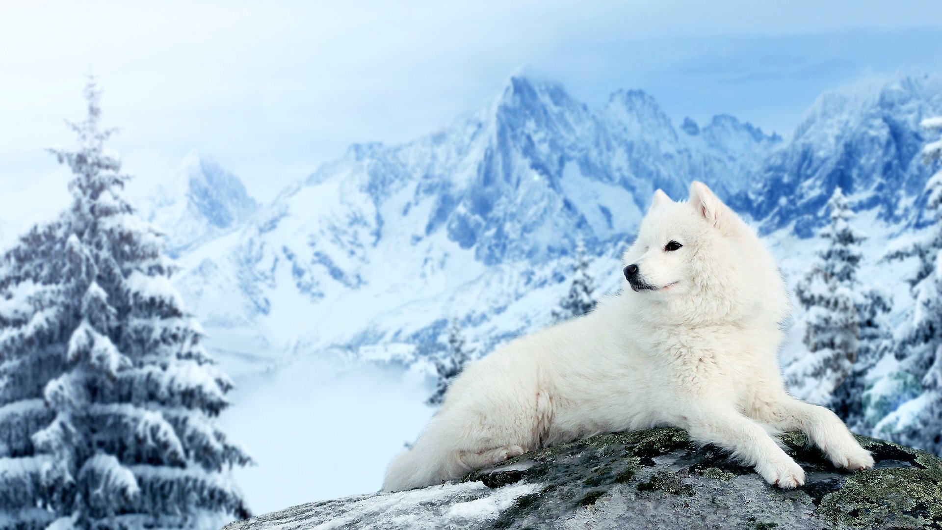 Dog-Samoyed-mountains-winter-snow-1920x1080-Need-iPhone-S-Plus-Background-for-IP-wallpaper-wpc9004322