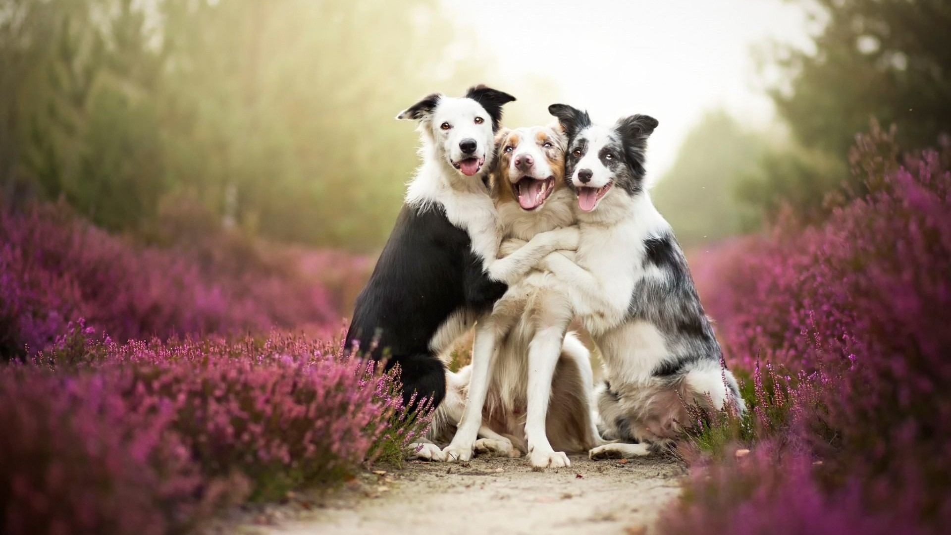 Dogs-Friendship-1920-x-1080-Need-iPhone-S-Plus-Background-for-IPhoneSPlus-Foll-wallpaper-wpc5804205