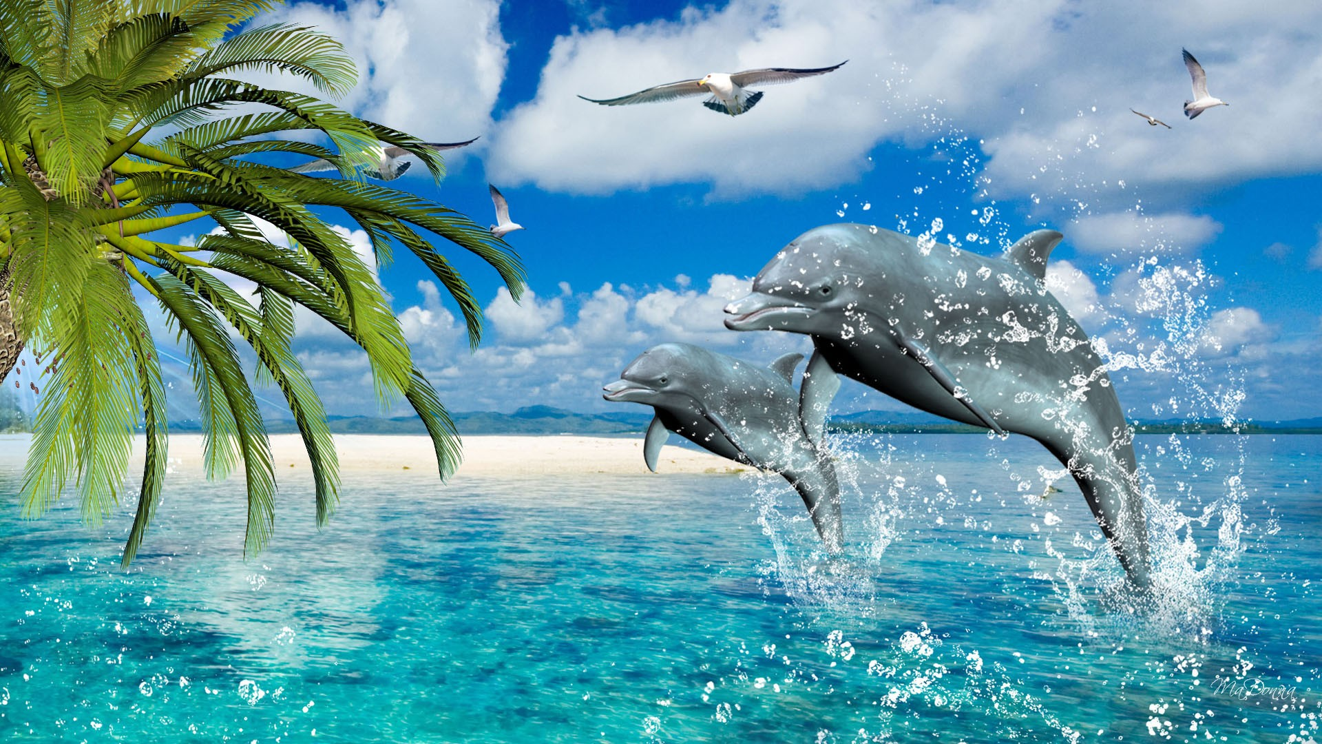 Dolphin-Best-wallpaper-wpc5804212