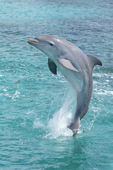 Dolphin-so-beautiful-wallpaper-wpc5804211