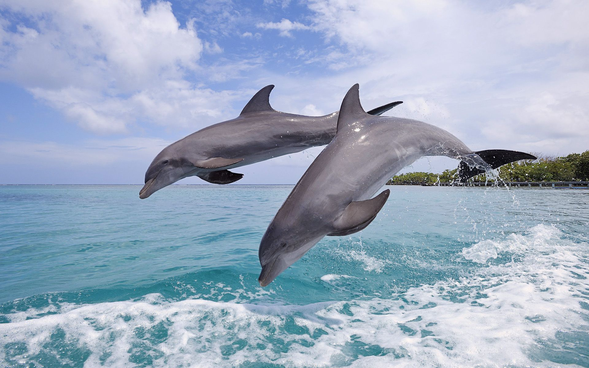 Dolphins-Jumping-wallpaper-wpc5804215
