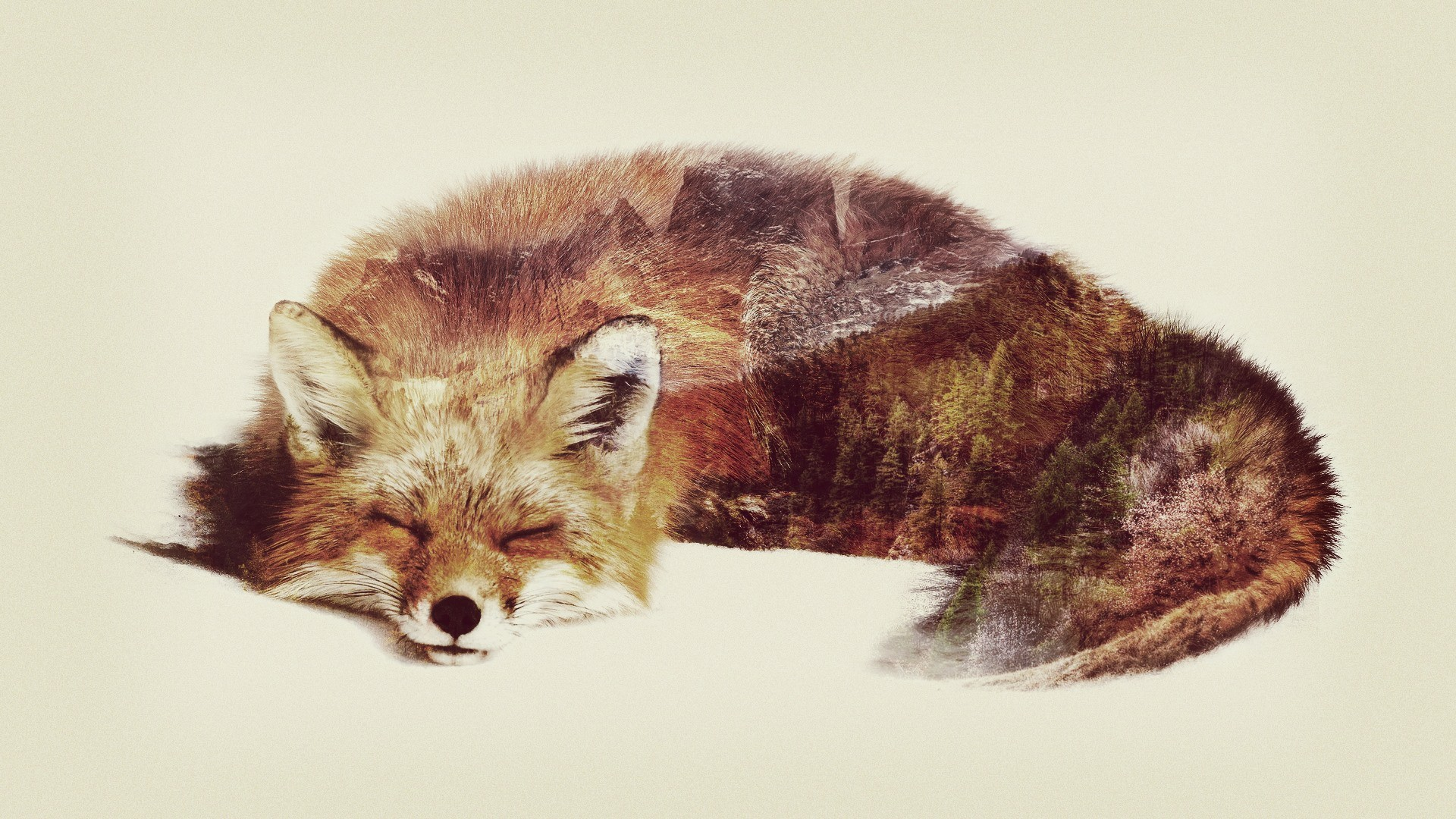Double-Exposure-Fox-Digital-1920x1080-http-ift-tt-VEcpbK-wallpaper-wpc5804237