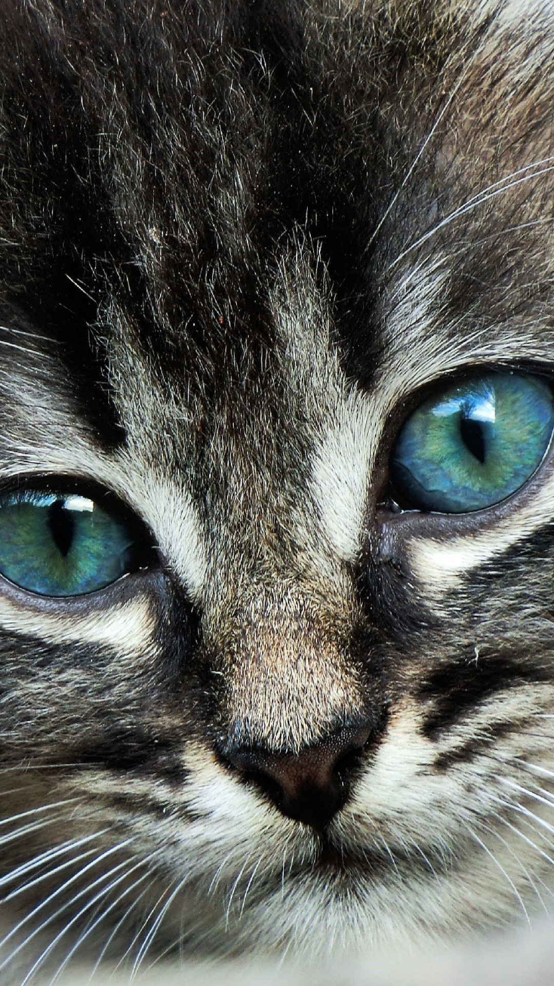 Download-1080x1920-cat-face-eyes-color-Sony-Xperia-Z-ZL-Z-Samsung-Galaxy-S-HTC-On-wallpaper-wpc5804349