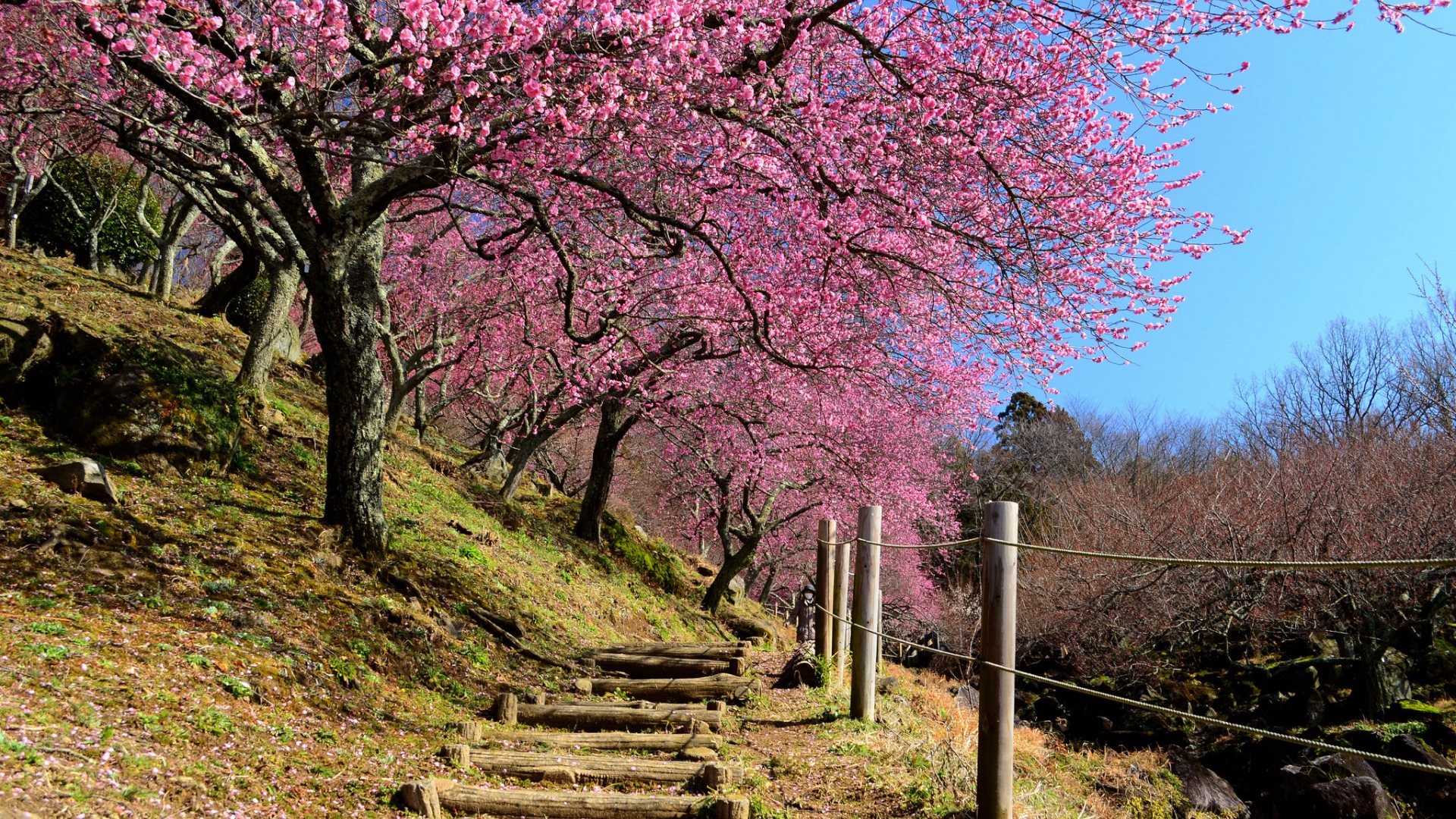 Download-the-sky-the-fence-spring-Japan-garden-Sakura-slope-stage-section-wallpaper-wp3605130