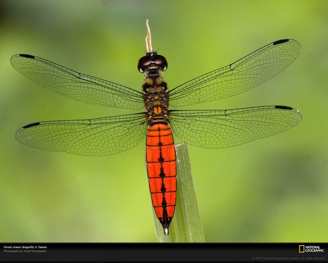 Dragonfly-HD-Backgrounds-×-Dragonfly-Ad-wallpaper-wp3804901