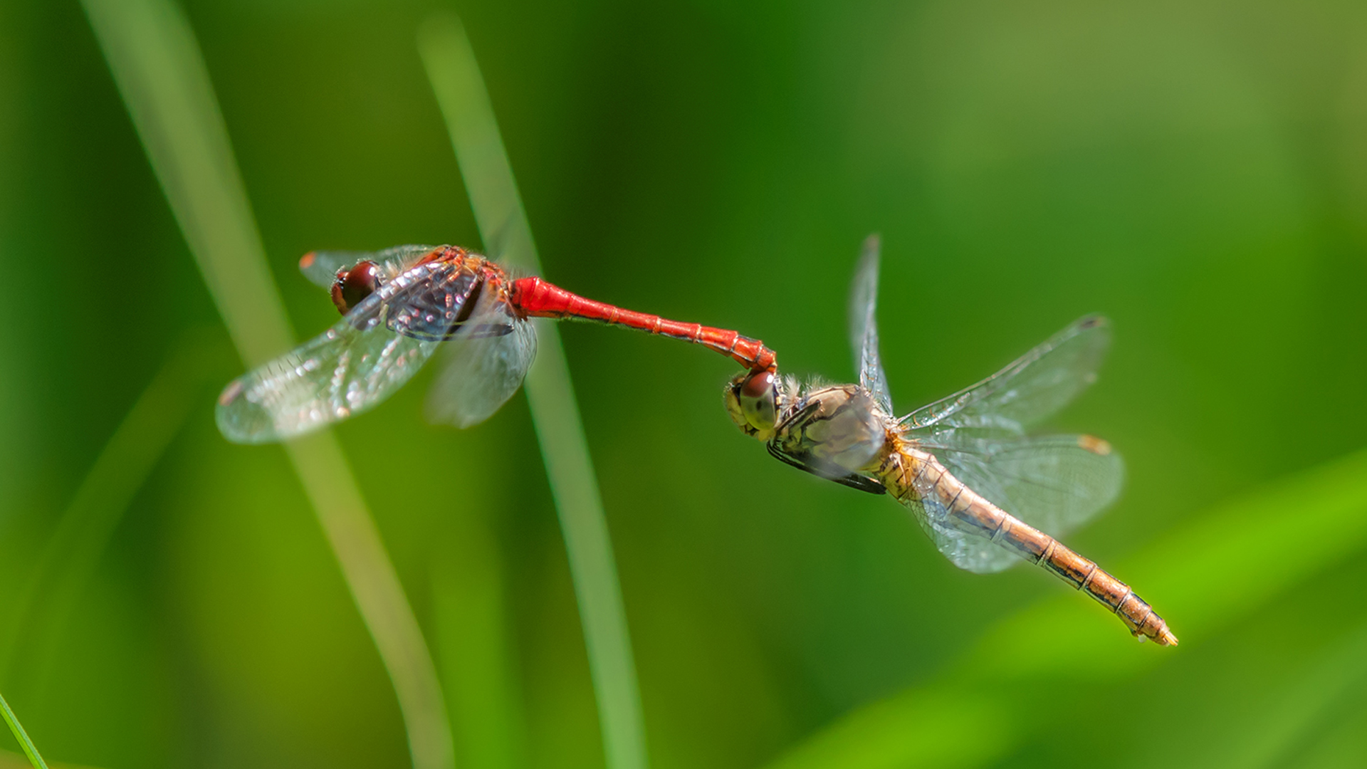 Dragonfly-Stock-Image-Image-×-Dragonfly-Adorable-Wa-wallpaper-wp3804909