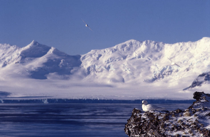 Dream-vacation-one-day-I-shall-visit-Antarctica-wallpaper-wpc9004556