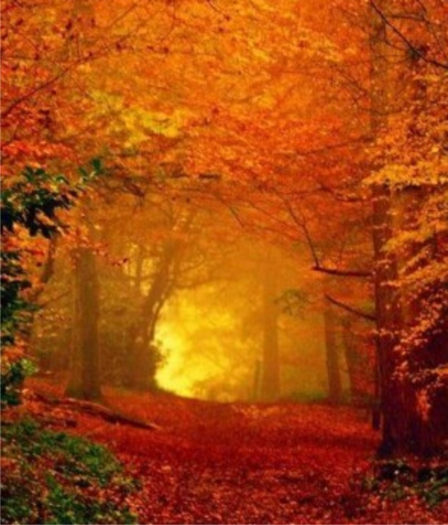 Fall-tree-tunnel-wallpaper-wp3605464