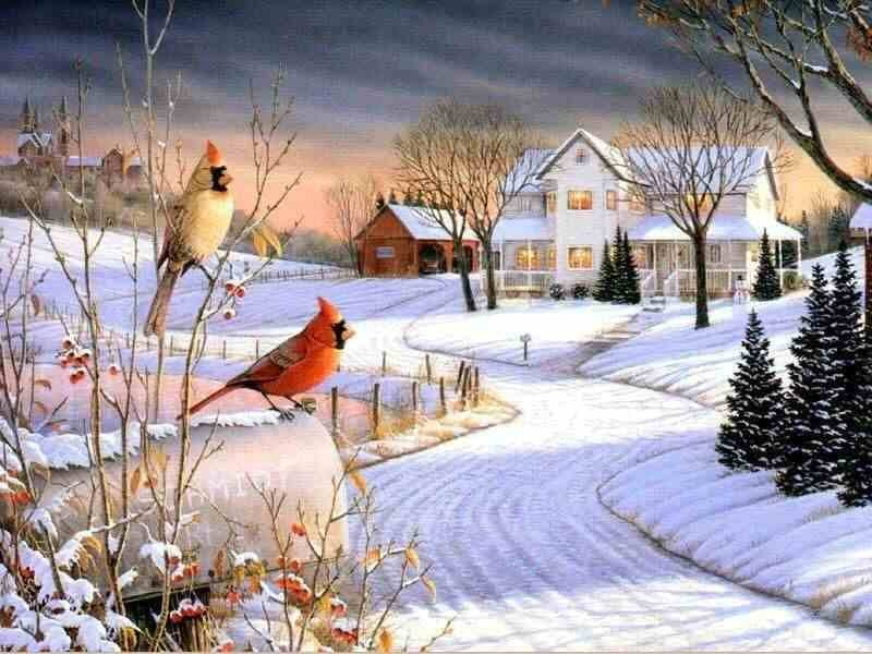 Farms-Country-Afternoon-Sam-Timm-Fields-Birds-Charmimg-Winter-Cardinals-Lights-Pines-Sky-Old-Grass-wallpaper-wpc9004865