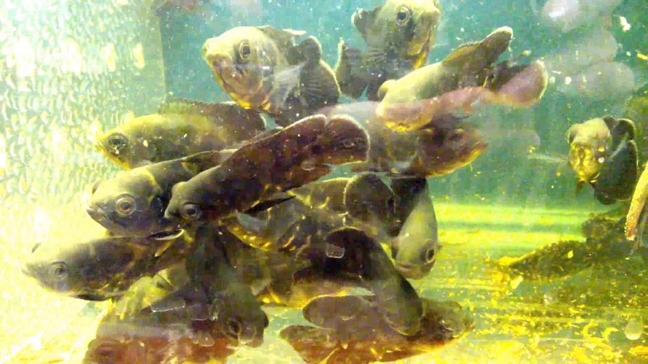 Fish-tank-hd-for-full-tankfish-Edited-fish-tank-howto-make-design-aquarium-FHD-wallpaper-wpc5804815