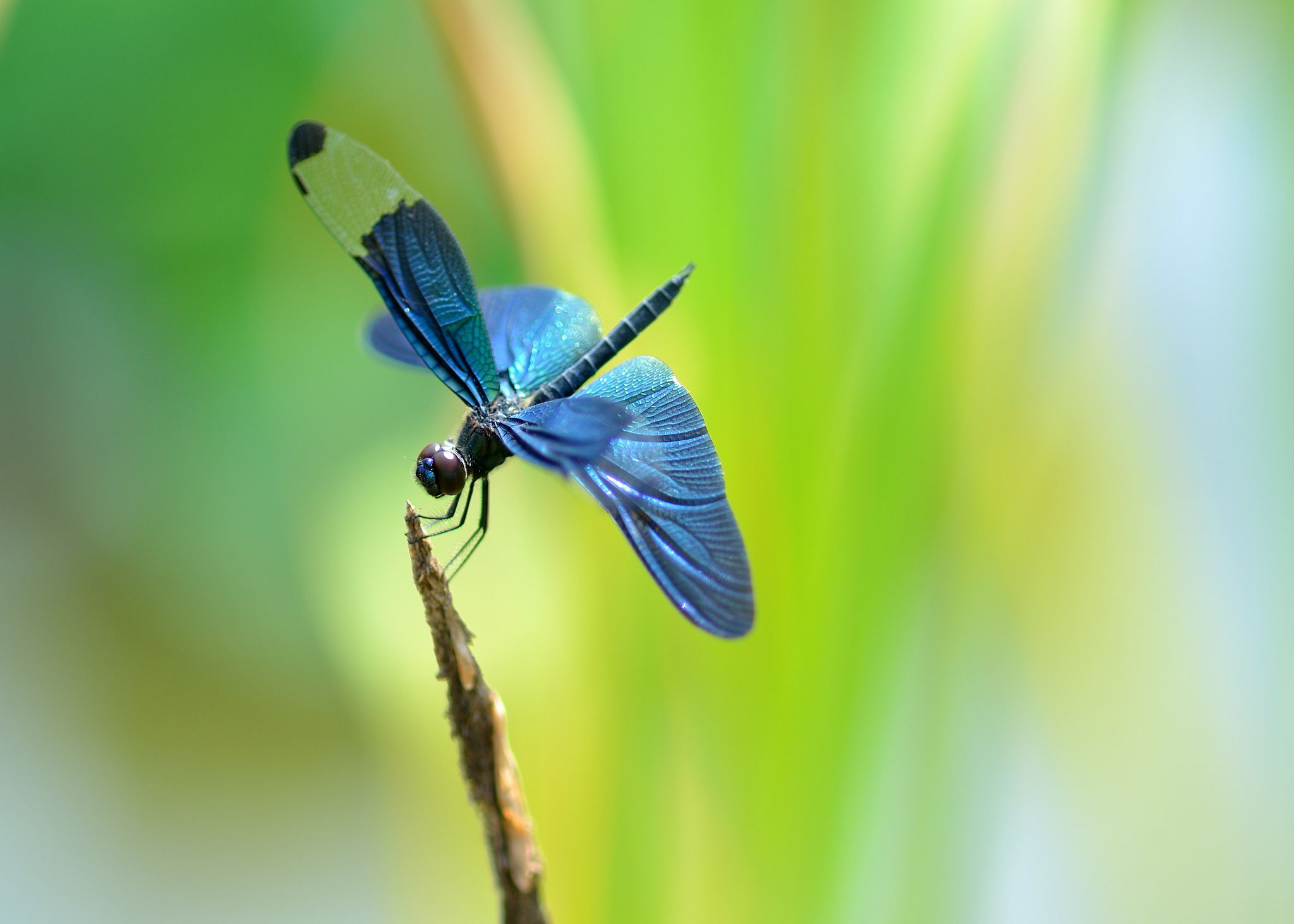 Free-Dragonfly-1920×1080-Dragonfly-Adorable-Wall-wallpaper-wp3805563