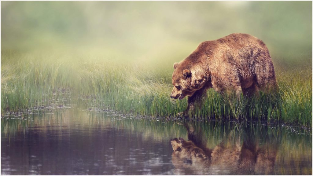 Grizzly-Bear-Animal-4k-grizzly-bear-animal-4k-1080p-grizzly-bear-animal-4k-wa-wallpaper-wpc5805599