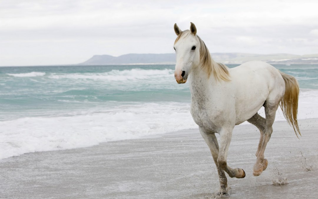 High-Definition-White-Horses-on-Beach-pictures-wallpaper-wpc5805902