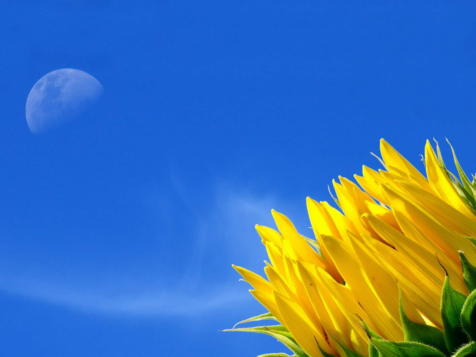 In-Yellow-Colour-Pulse-wallpaper-wpc58010065