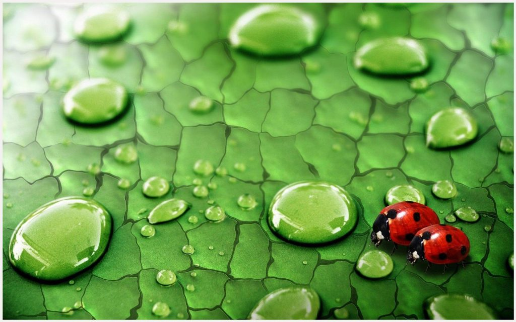 Lady-Bugs-Green-Leaf-Water-Drop-lady-bugs-green-leaf-water-drop-1080p-lady-bu-wallpaper-wpc9006961