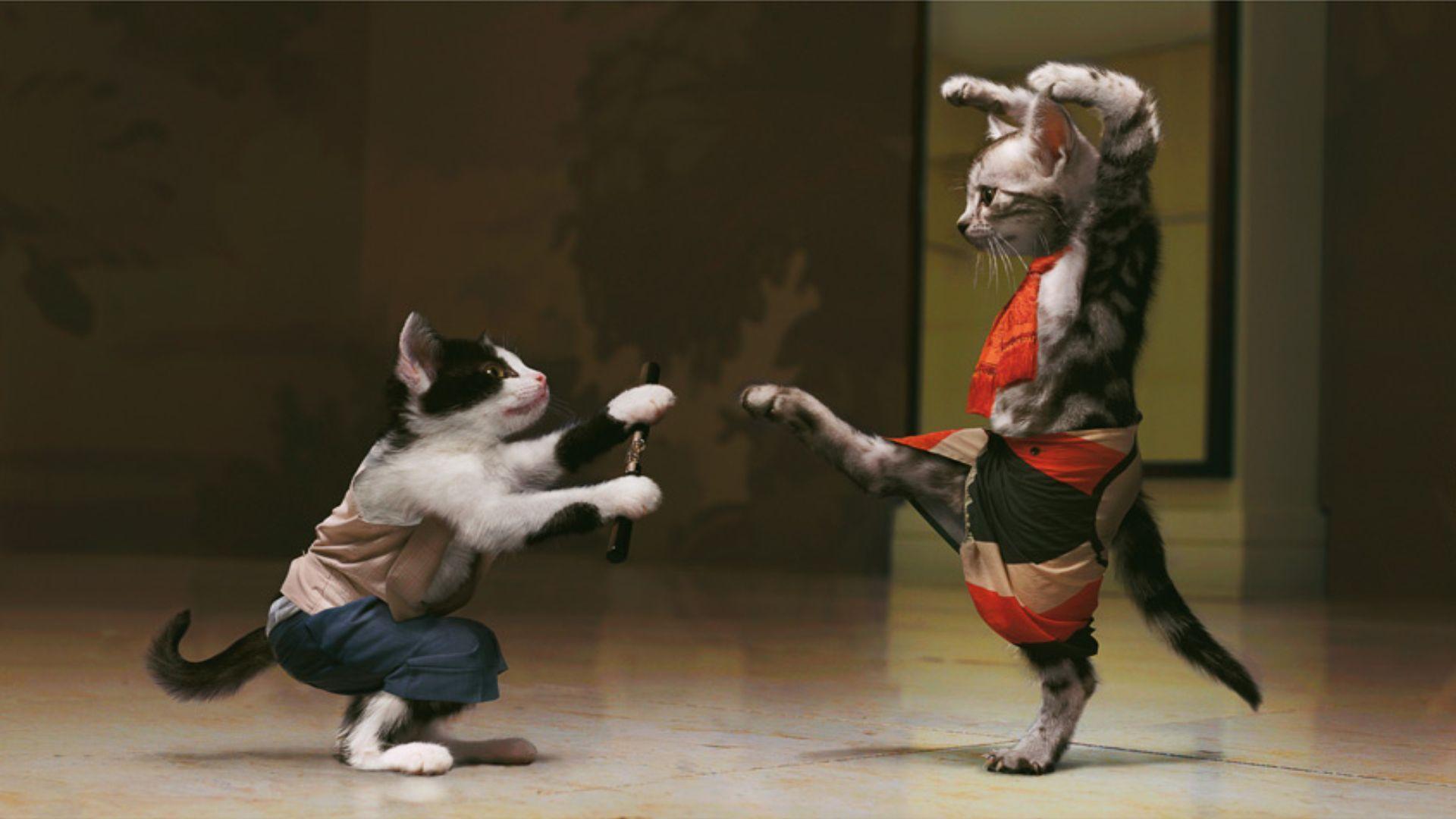 Martial-Arts-Forums-MyAnimeList-net-wallpaper-wp3808048