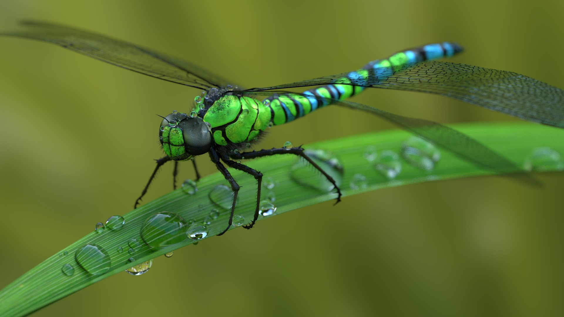 Robinson-London-pictures-of-dragonfly-1920x1080-px-wallpaper-wp3809902