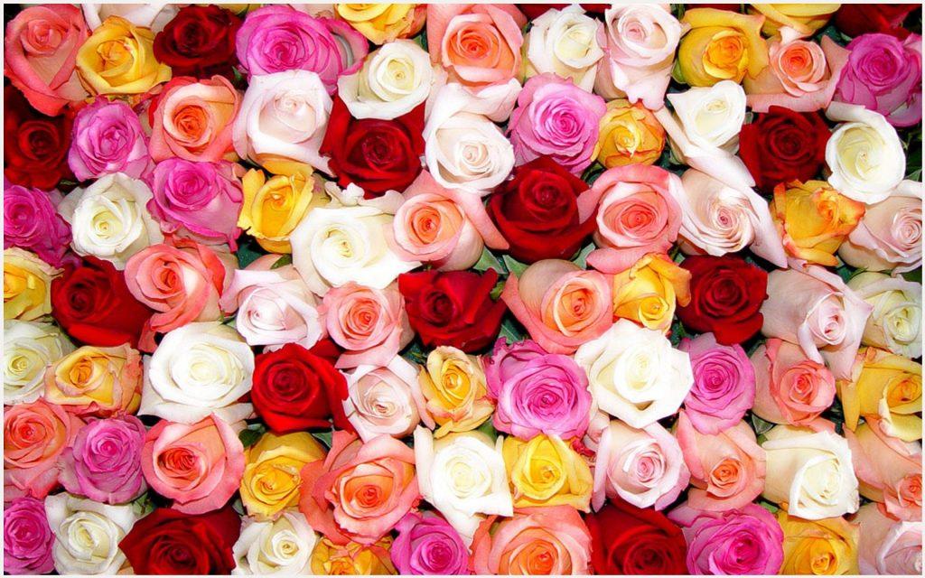 Rose-Color-Beautiful-Flowers-rose-color-beautiful-flowers-1080p-rose-color-be-wallpaper-wpc5808533