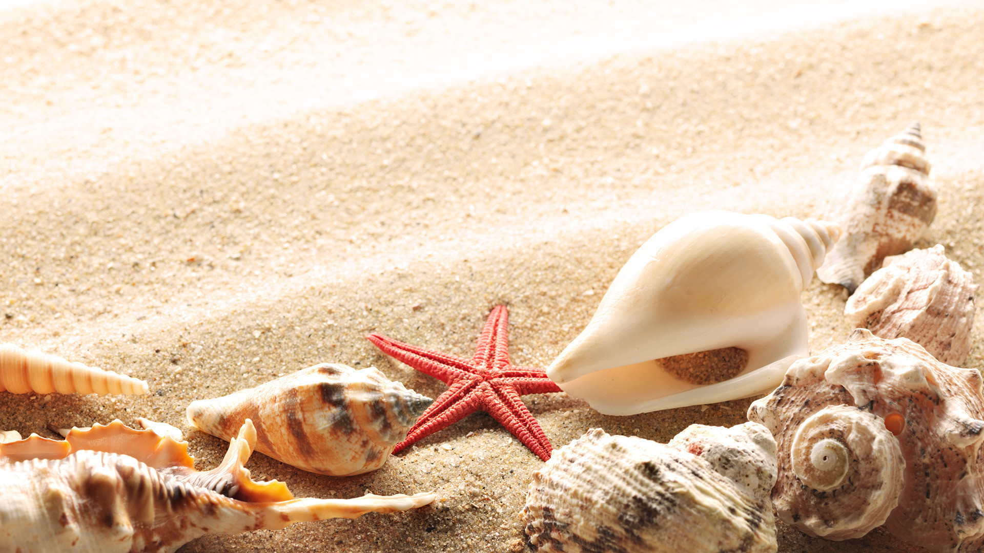 Shells-on-the-golden-sand-from-the-beach-Summers-Seasons-download-beautif-wallpaper-wpc9009090
