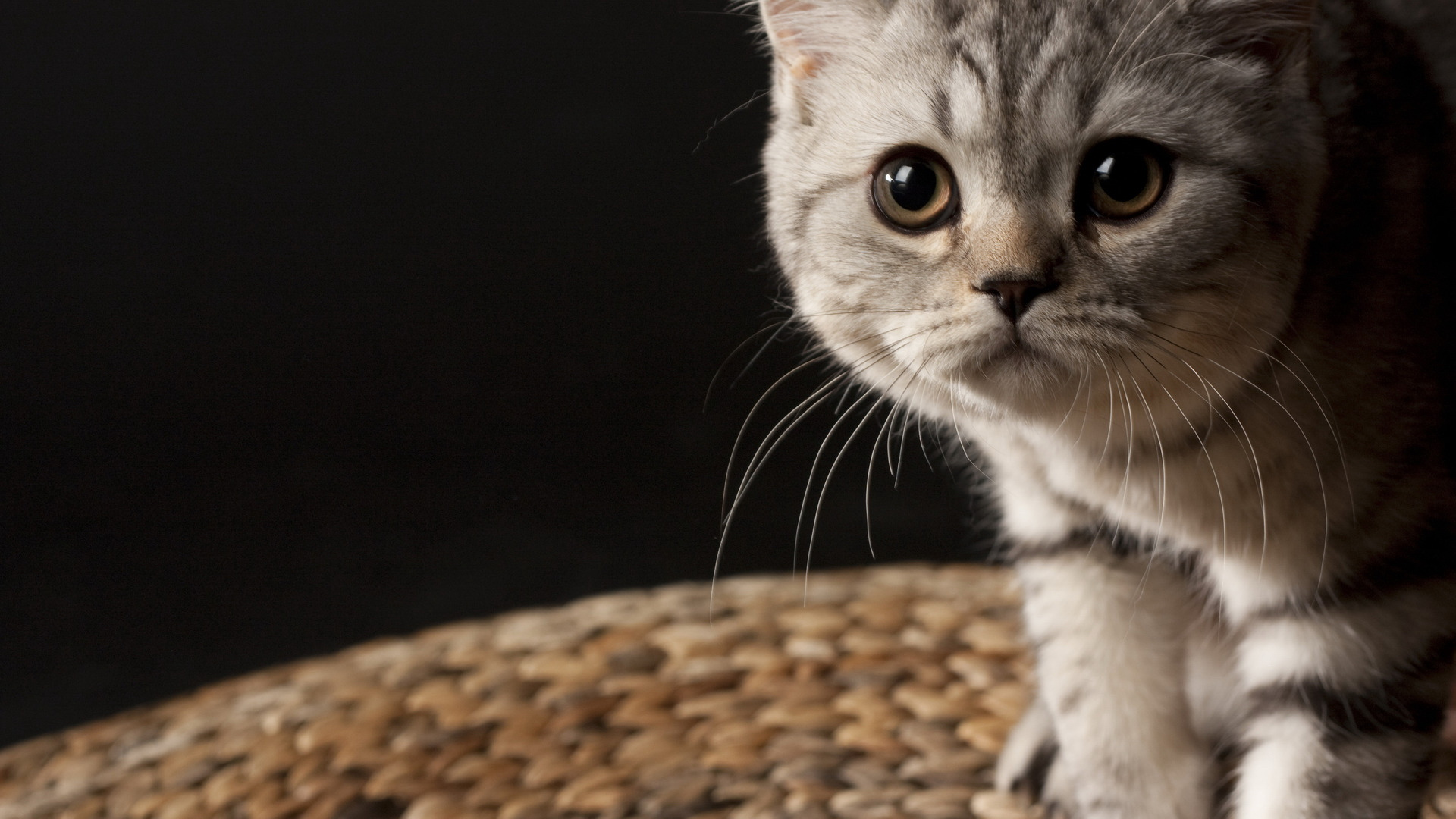 Silver-Tabby-CUTE-CATS-Pinterest-Tabby-cats-Cat-and-wallpaper-wpc5808750