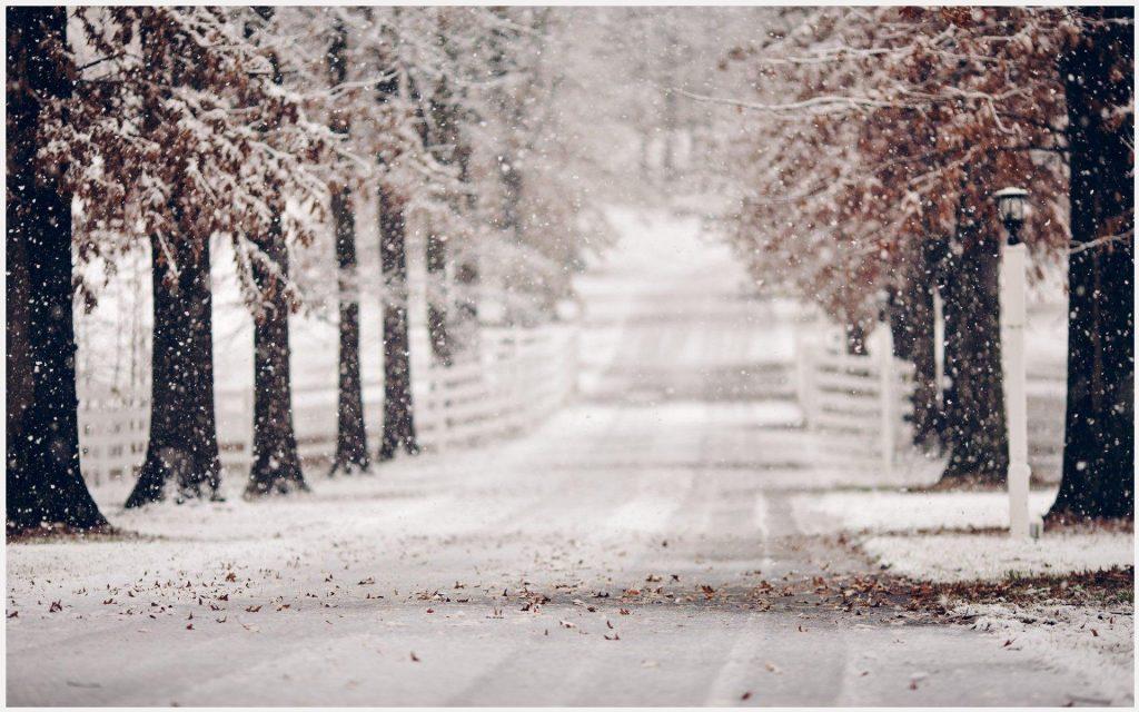 Snowy-Trees-Winter-Road-snowy-trees-winter-road-1080p-snowy-trees-winter-road-wallpaper-wpc9009277