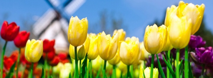 Tulips-wallpaper-wpc90010106