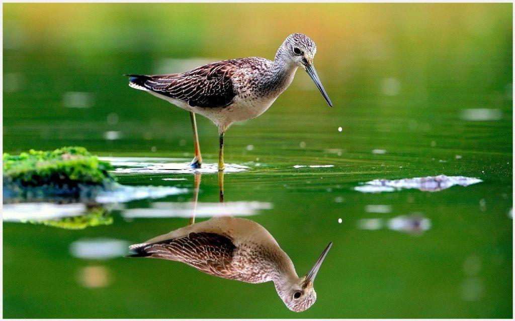 Water-Bird-Green-Water-water-bird-green-water-1080p-water-bird-green-water-wa-wallpaper-wpc90010510