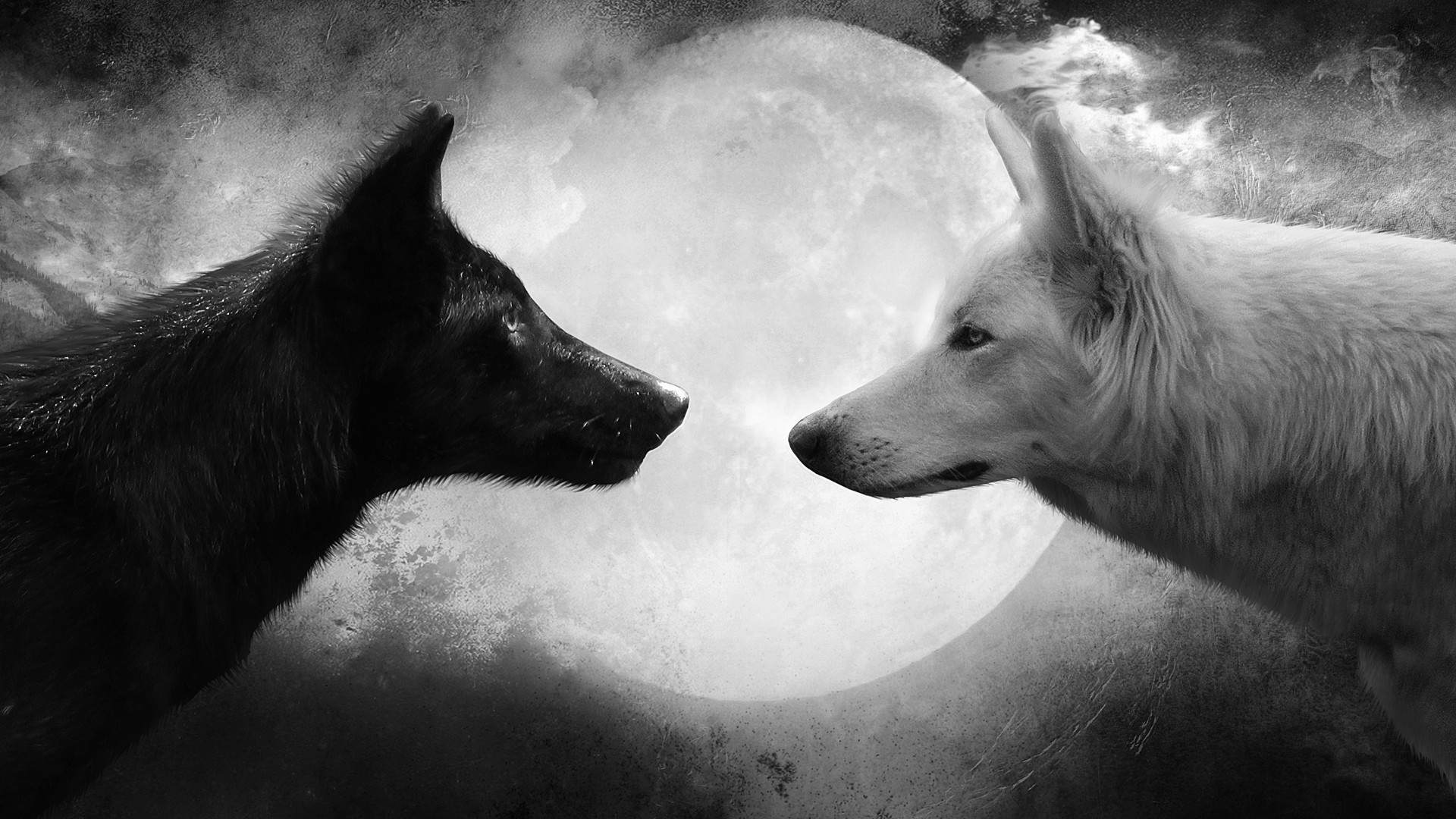 Wolves-Yin-Yang-wallpaper-wpc90010740