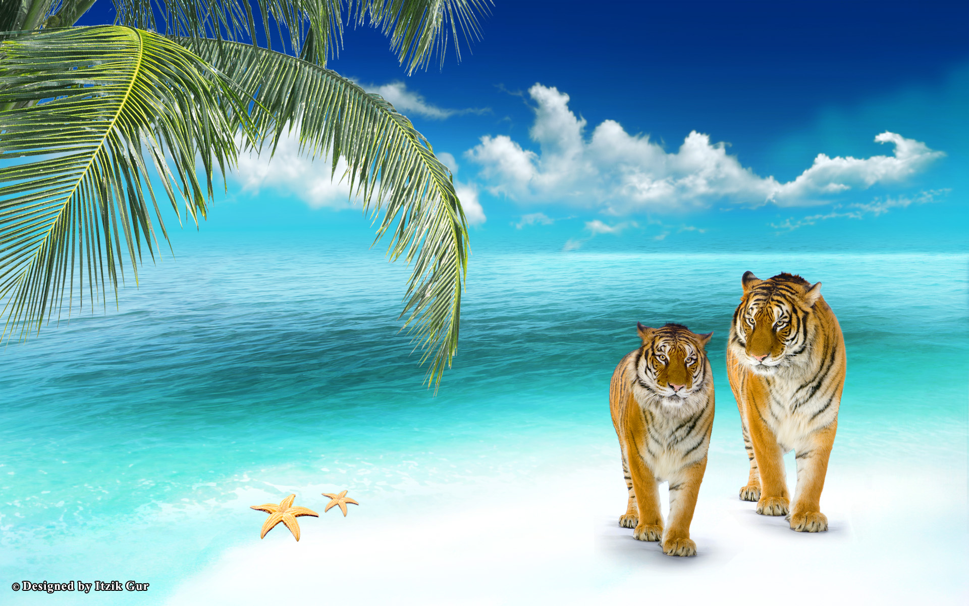 animals-at-the-beach-Google-Search-wallpaper-wpc5802128