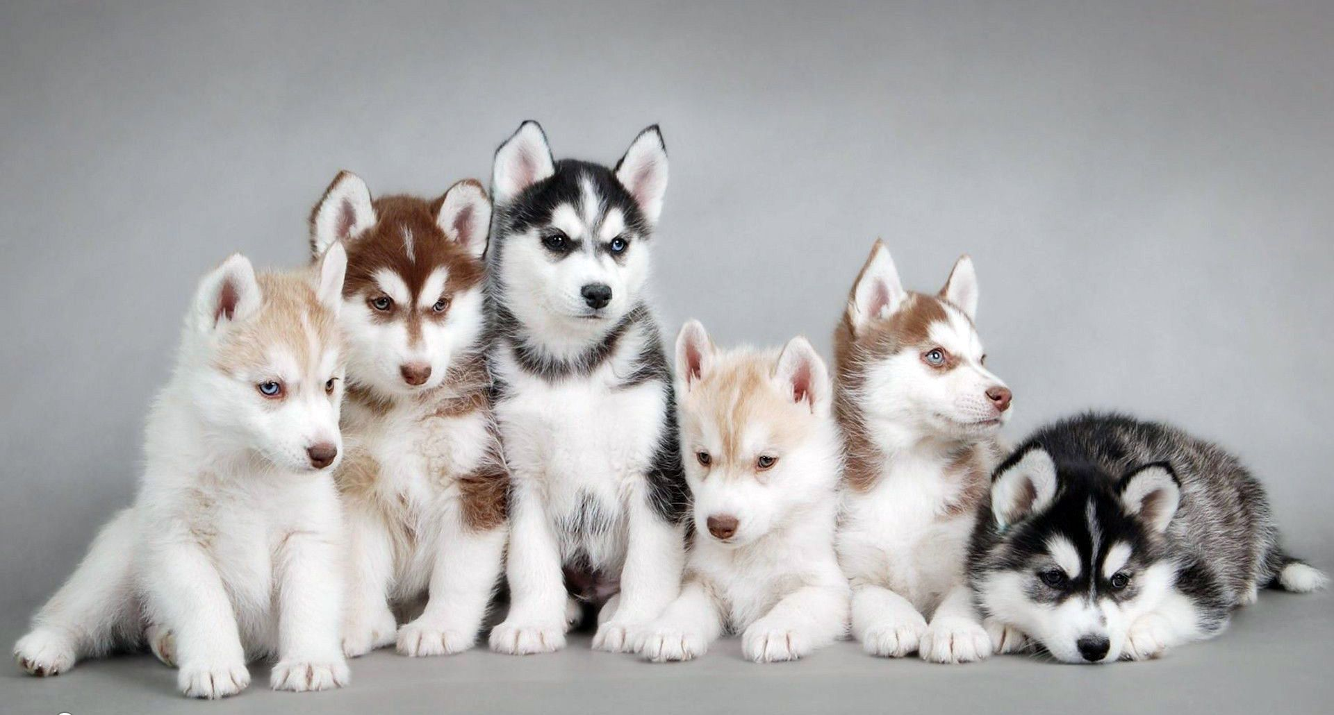 baby-puppies-category-Amazing-baby-puppies-backround-wallpaper-wpc5806