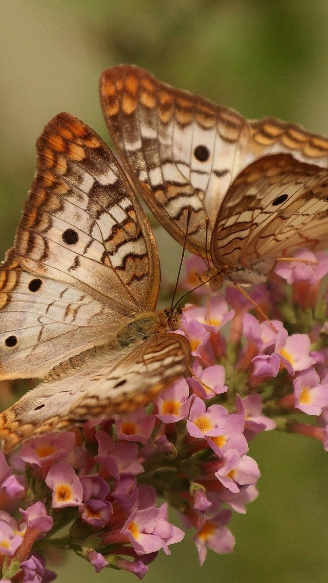butterfly-couple-flowers-wings-patterns-wallpaper-wpc5803108