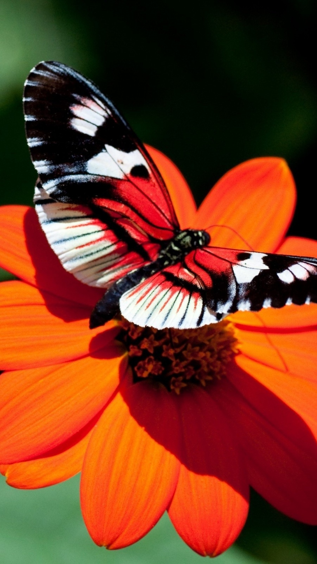 butterfly-flower-flight-wings-wallpaper-wp3803529