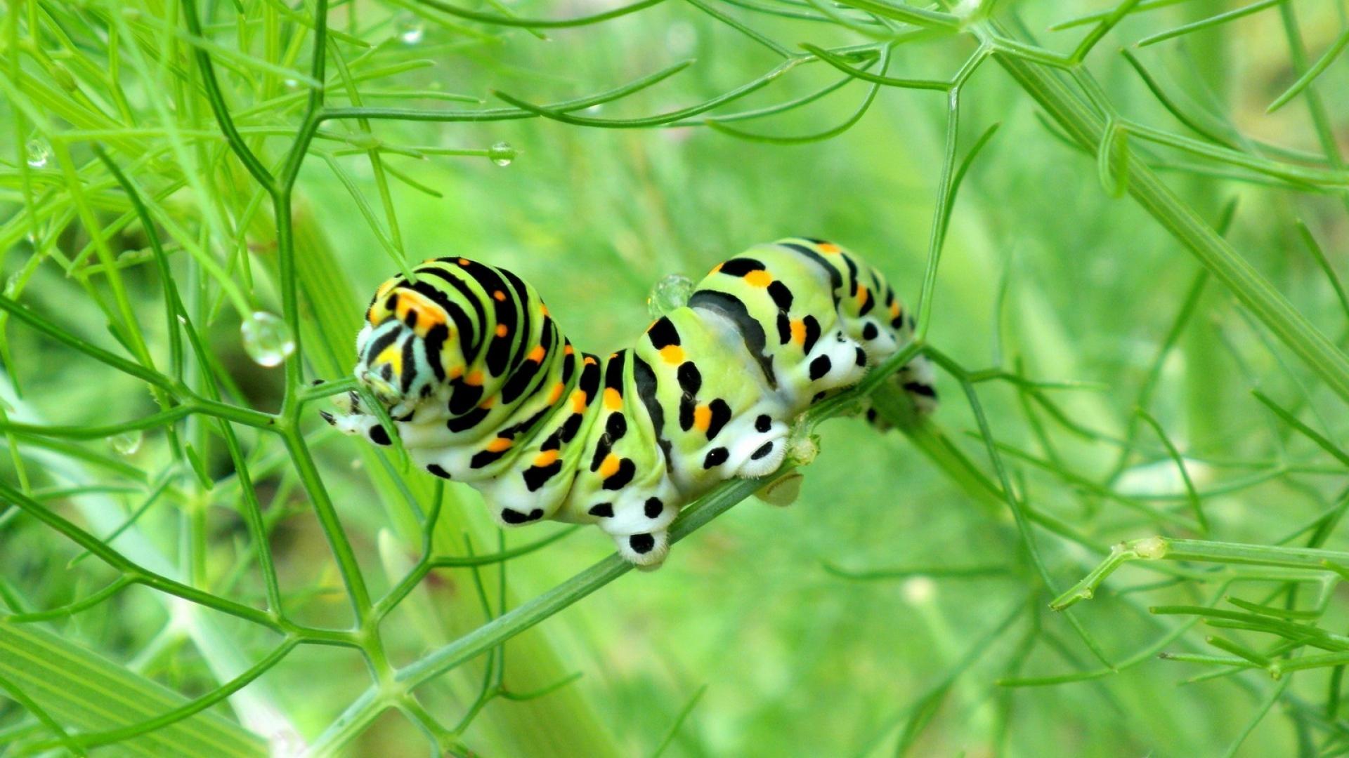 caterpillar-green-grass-http-www-u-org-caterpillar-green-grass-wallpaper-wp3803669