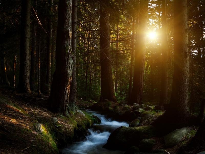 cbeadecbacbce-beautiful-forest-beautiful-sunset-wallpaper-wpc5801482