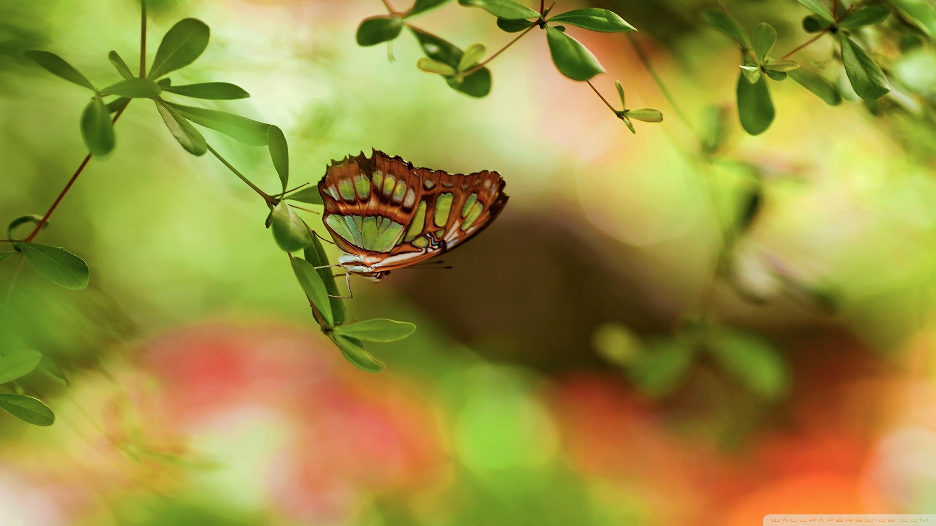 colorful-butterfly-girly-hd-1920x1080-wallpaper-wpc5803582