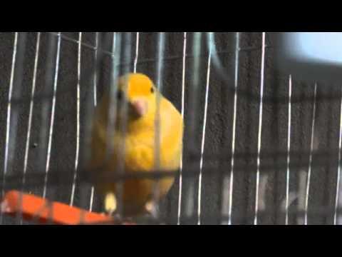 cute-animals-drawings-cute-animals-videos-cute-animals-cartoon-cute-animals-to-draw-cute-a-wallpaper-wp360500