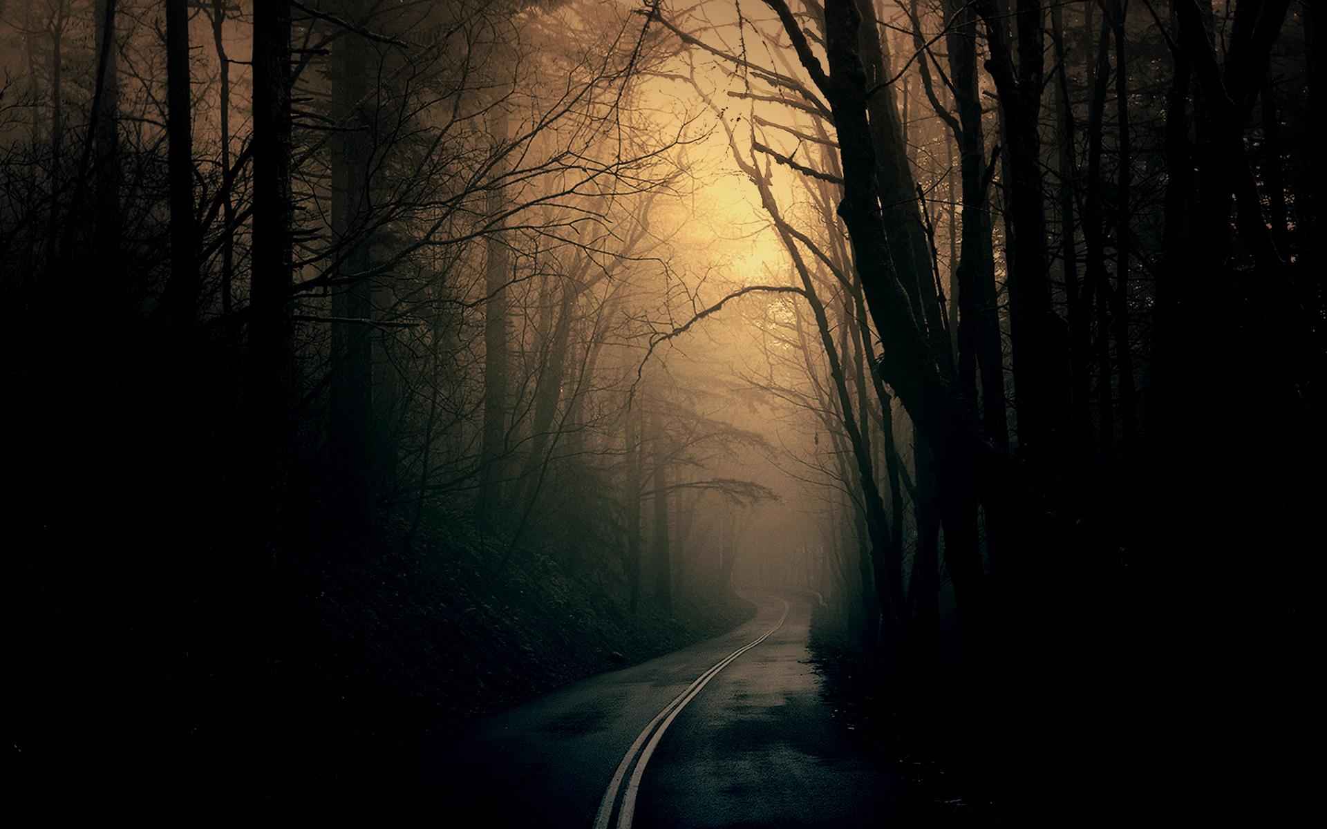 dark-forest-wallpaper-wpc9004021