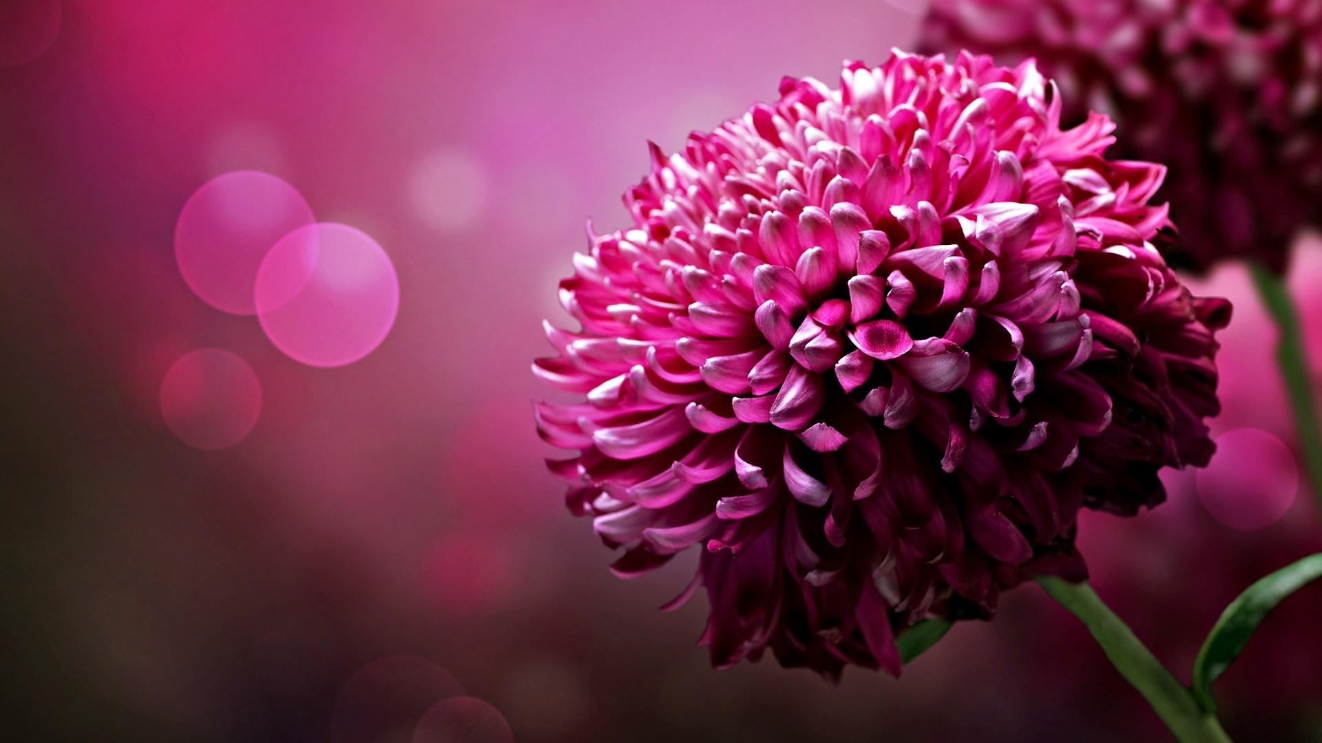 desktop-full-screen-floral-hd-1920x1080-wallpaper-wp3804485
