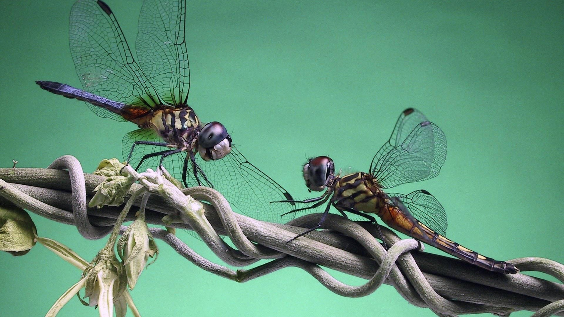 dragonfly-Computer-Desktop-Backgrounds-×-Dragonfly-Pictures-Wa-wallpaper-wp3804897
