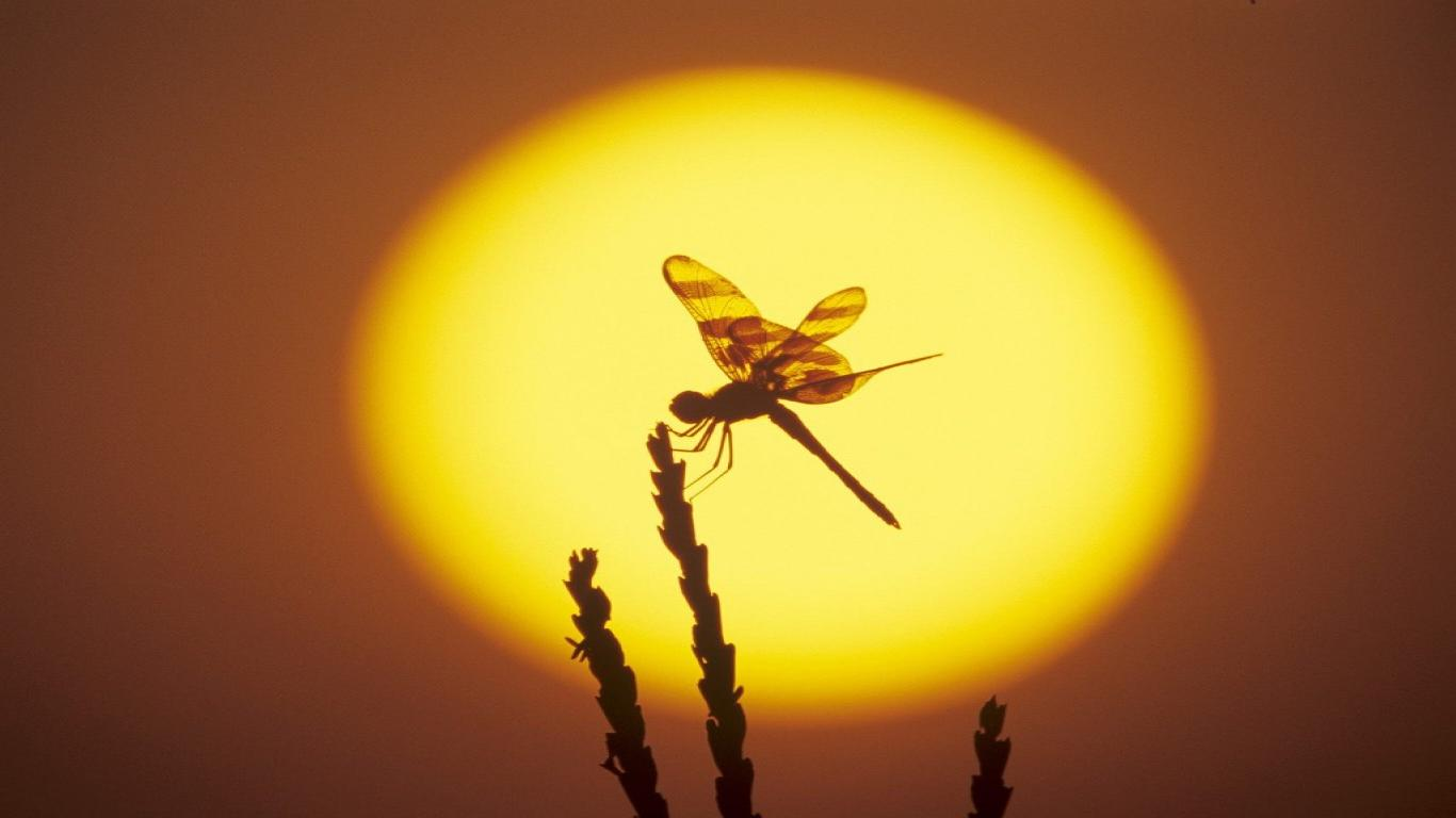 dragonfly-Computer-Desktop-Backgrounds-1920×1080-Dragonfly-wallpaper-wp3804898