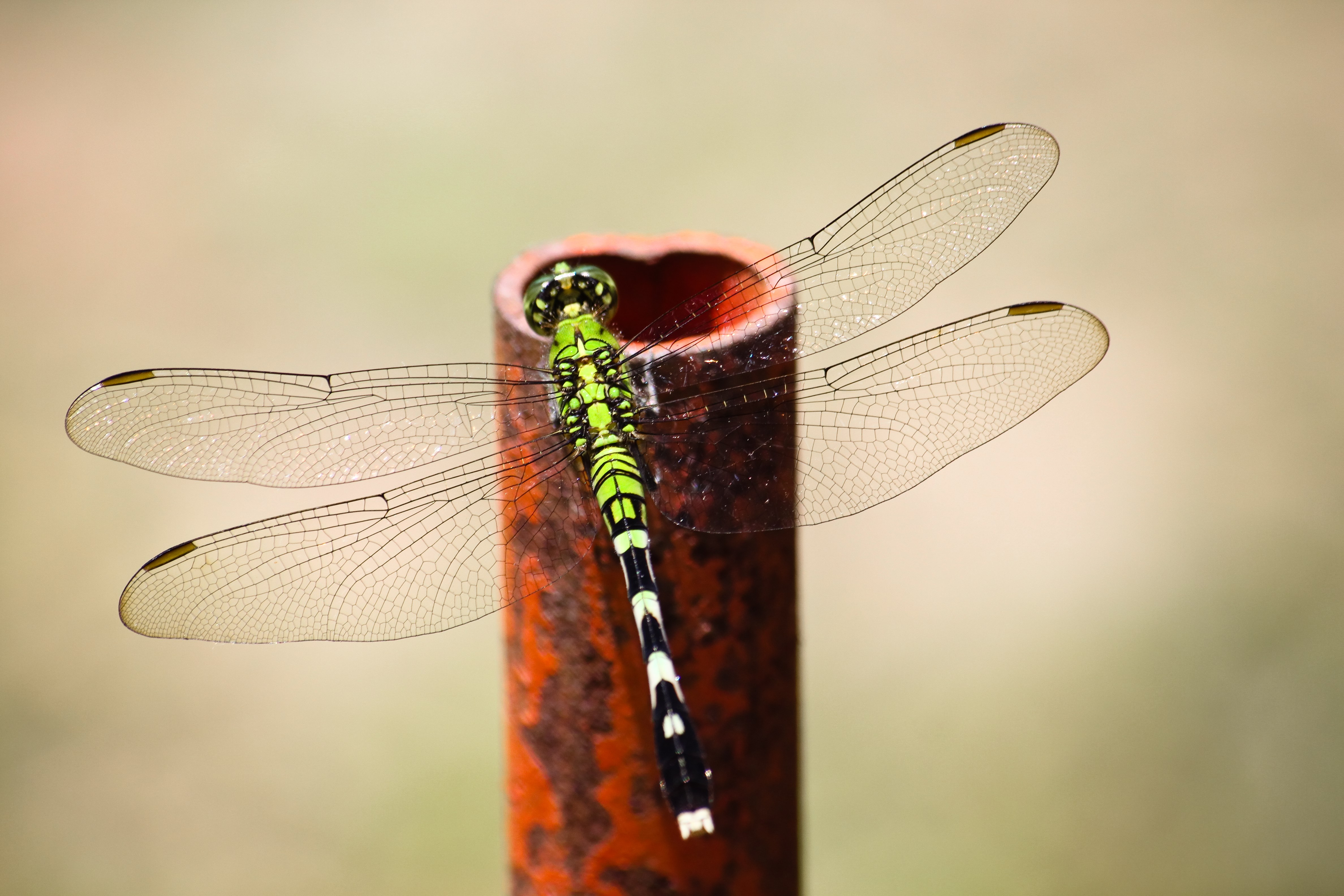dragonfly-picture-1080p-windows-kB-Irwin-London-wallpaper-wp3804906