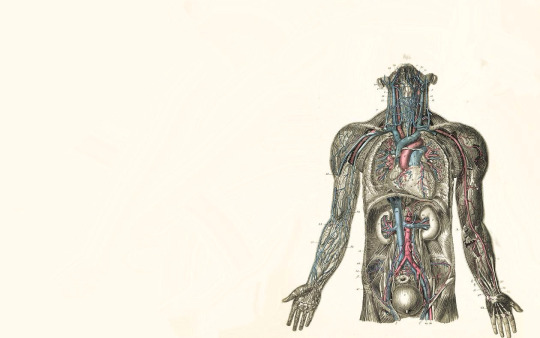 feccbfdbfbeff-medical-human-anatomy-wallpaper-wpc9201808