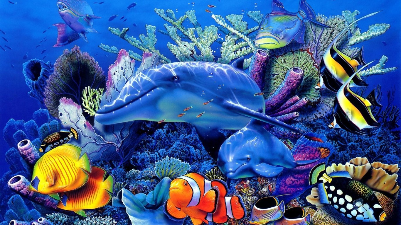 fish-Live-for-Android-Android-Live-Download-1920×1080-Fish-Image-wallpaper-wpc5804811